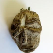Kartoffel b